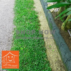 Malaysian Grass Carpet 2 Ft x 5 Ft